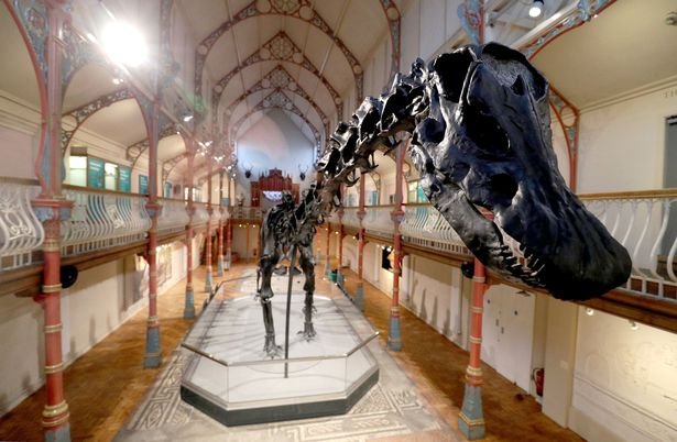 Dippy in Dorchester